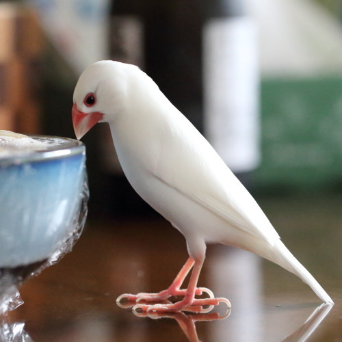 table siro kuro (2)