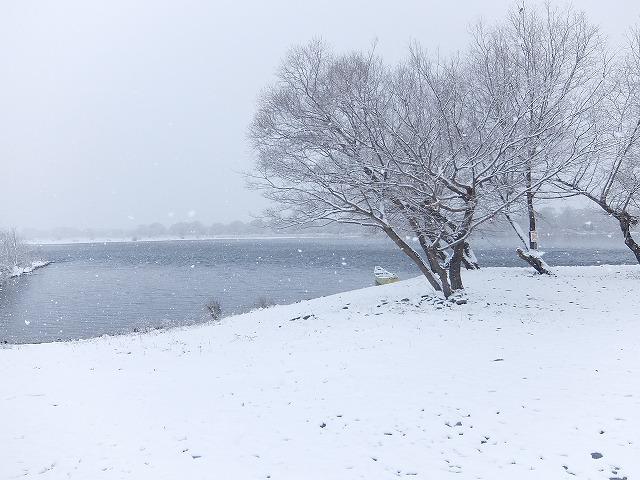 2017-1-30-1降る雪