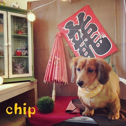 chip 松竹