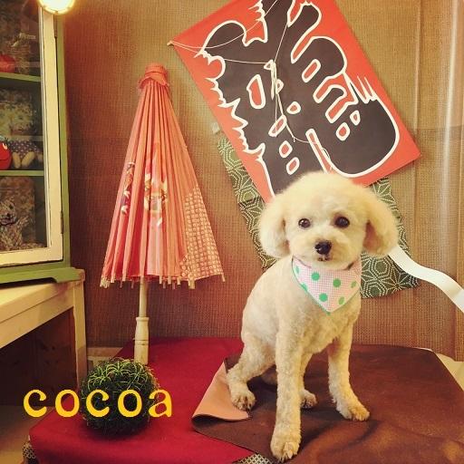 cocoro 花田