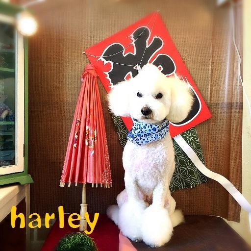 harley 伊藤