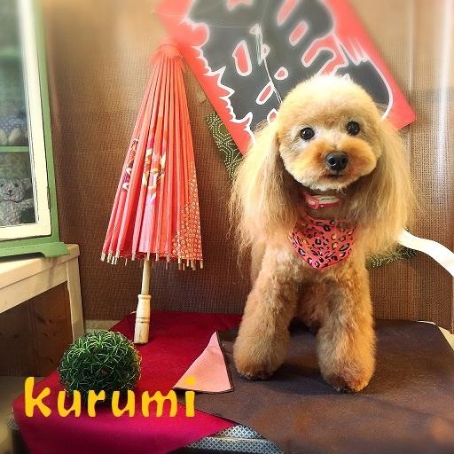 kurumi 新田