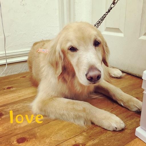 love 灰佐