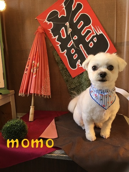 momo 桑田