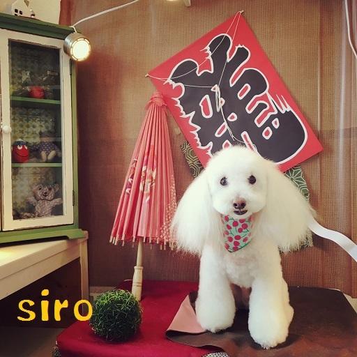 siro 笠