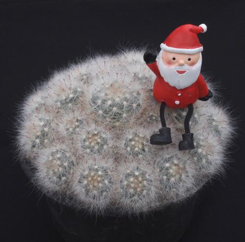 クリスマス仕様2