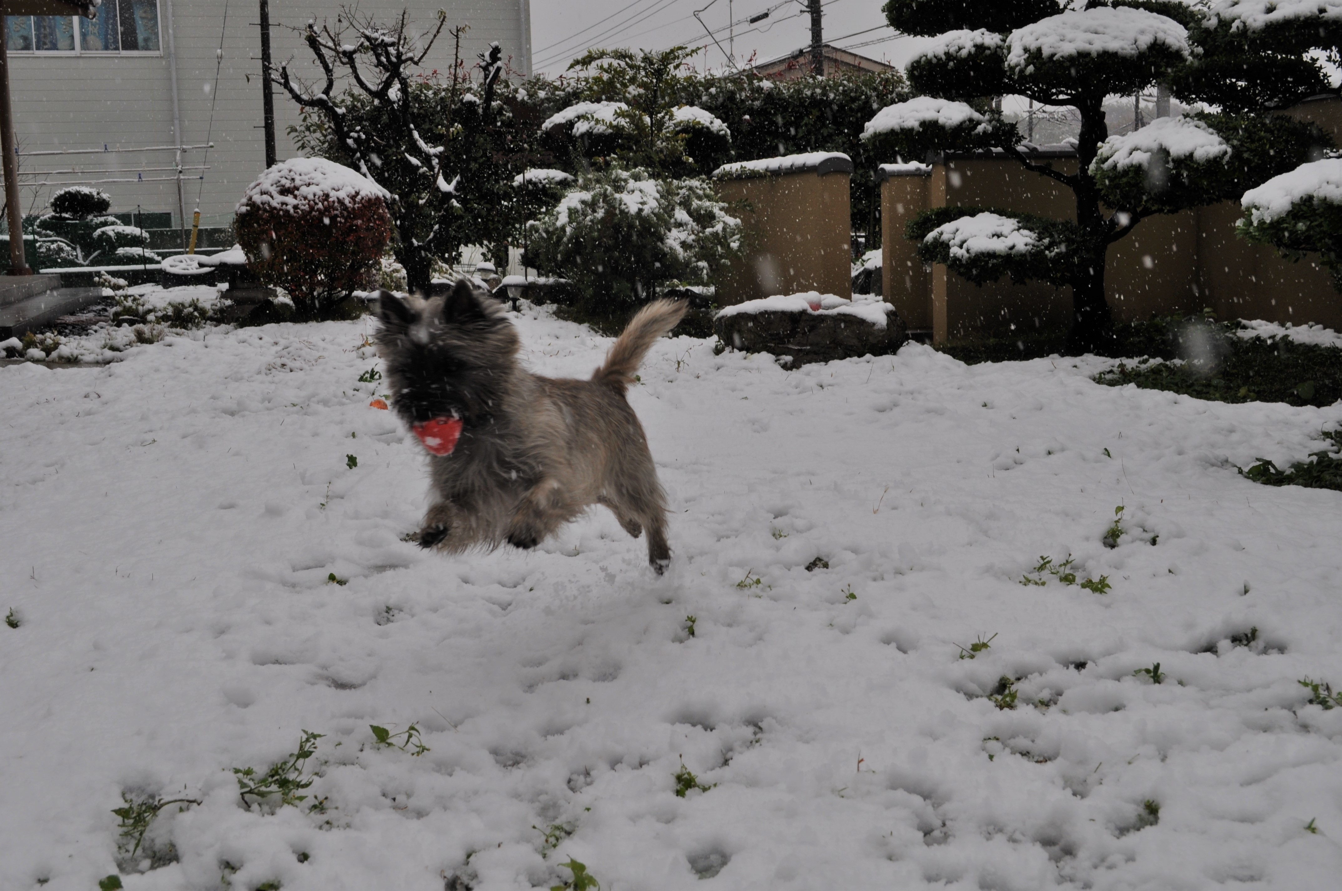 20161124初雪5