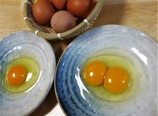 2016.11.15ホシノ卵1