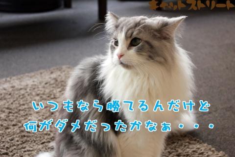 6372_20170113123224bf5.jpg