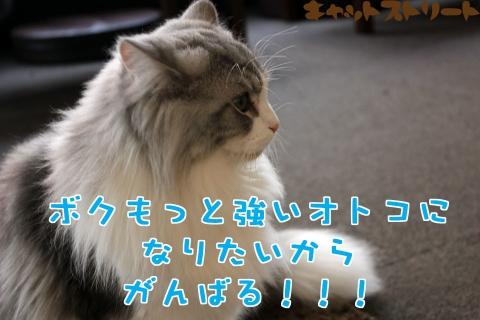 6373_20170113123226dda.jpg