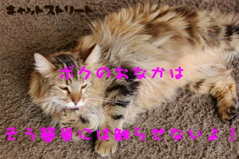 6377_20170112114908caf.jpg