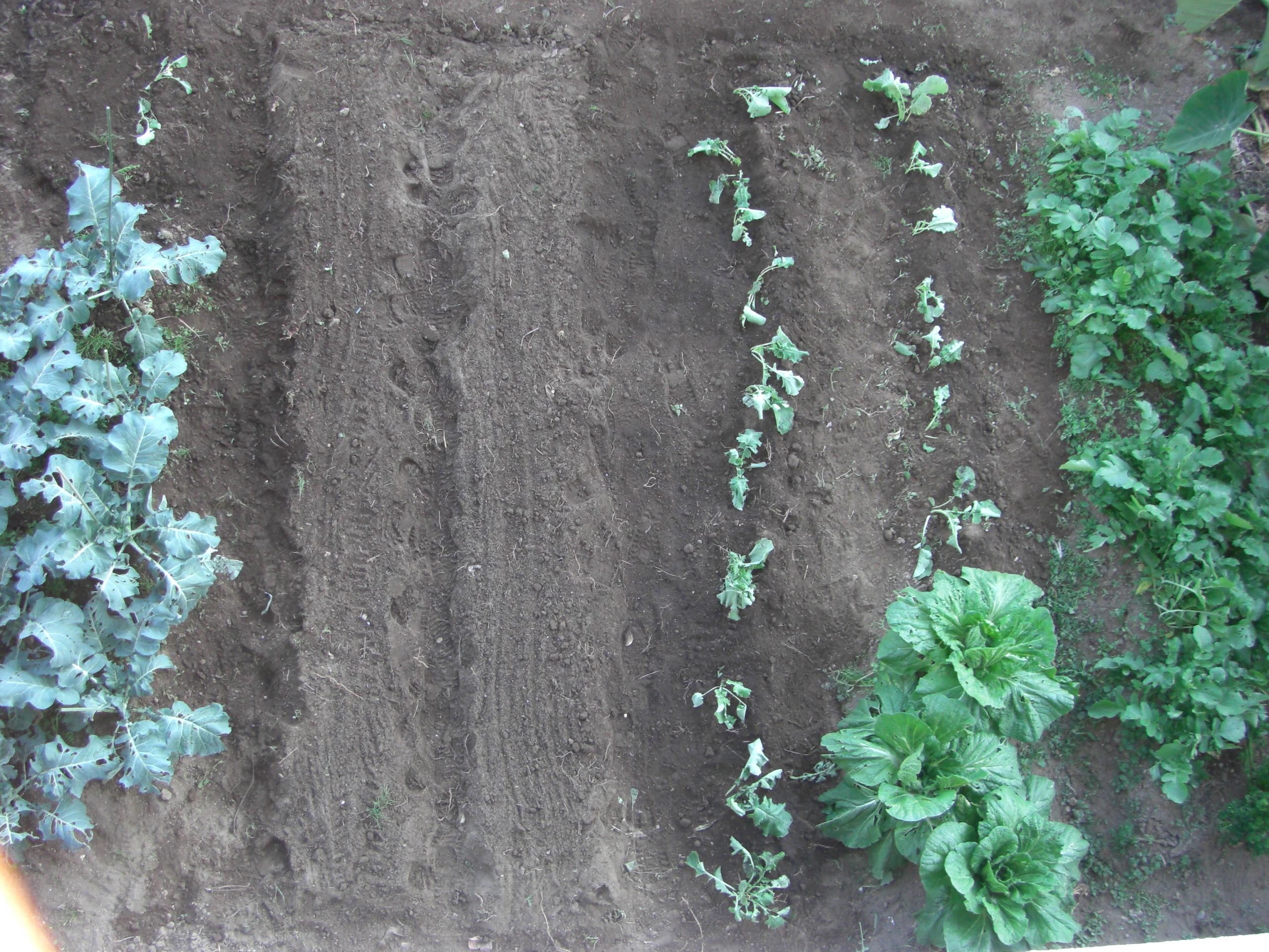2016.10.26冬野菜植付