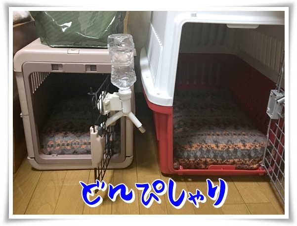 IMG_1294_1.jpg
