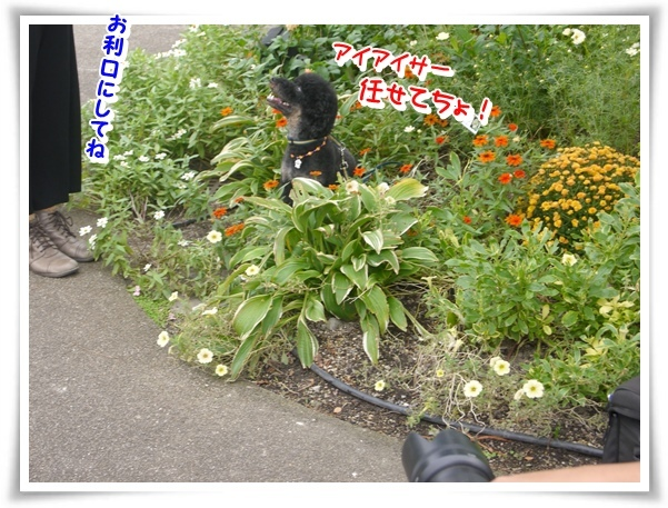 P1150471_1.jpg