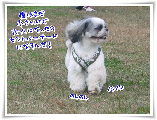 P1150846_1.jpg