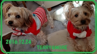 20161224terry-more.jpg
