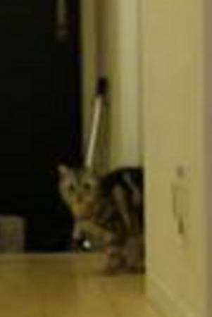 先住猫さん