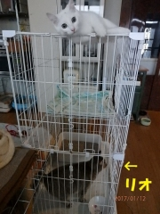 blog170113_2.jpg