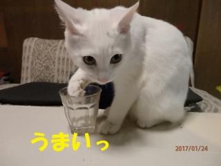 blog170124_3.jpg