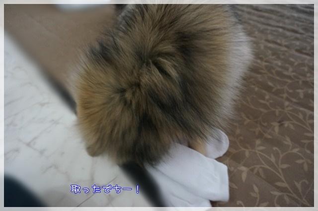ひっぱりっこ4 16-11