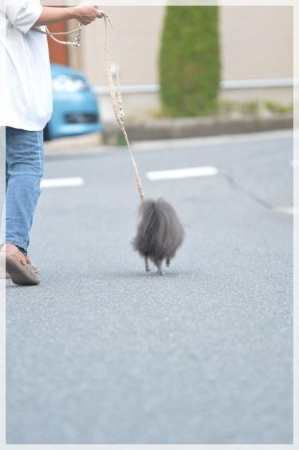 お散歩3 16-11