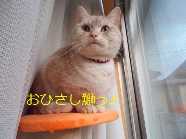satsuki0103