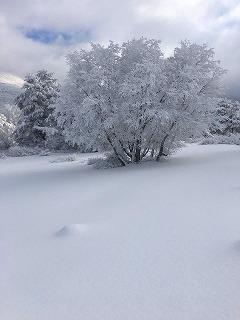 蔵王平の雪