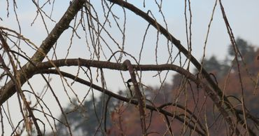 IMG_4940野鳥