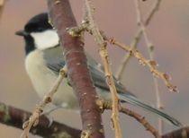 IMG_4942野鳥2