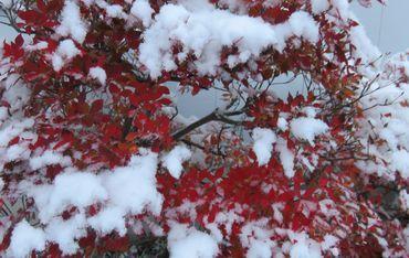 IMG_5105雪