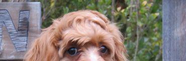 トサカ前髪4