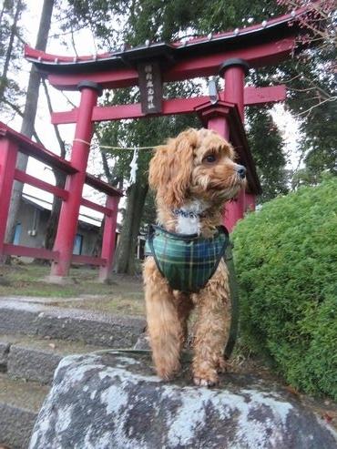 IMG_5453神社