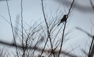 IMG_5513野鳥
