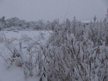 IMG_5548雪景色