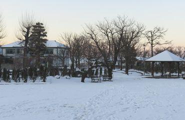IMG_5561バラ公園