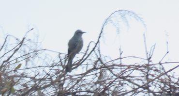 IMG_5694野鳥