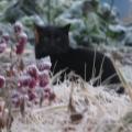 IMG_5728黒猫