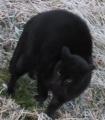 IMG_5732黒猫