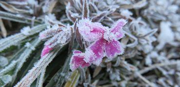 IMG_5847凍った花