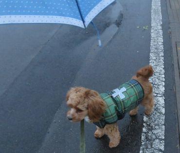 IMG_5872雨散歩