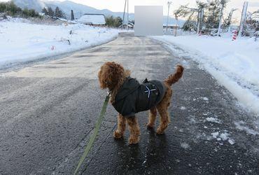 IMG_5906凍る道