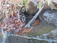 IMG_5914凍る川の水