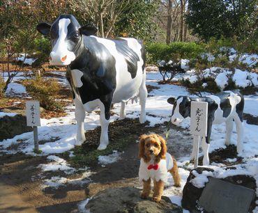 IMG_5972乳牛親子像