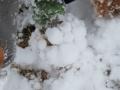 IMG_6218雪玉