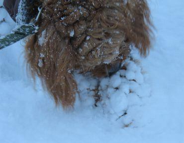 IMG_6296雪玉