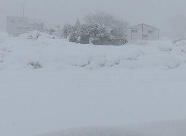 IMG_6353雪