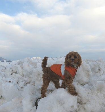 IMG_6461雪山