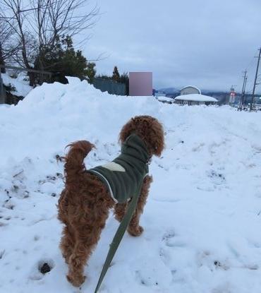 IMG_6474除雪