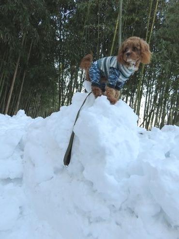 IMG_6615竹林雪山