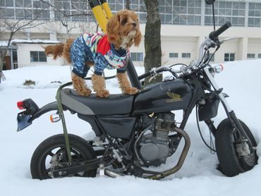 IMG_6676本物バイク